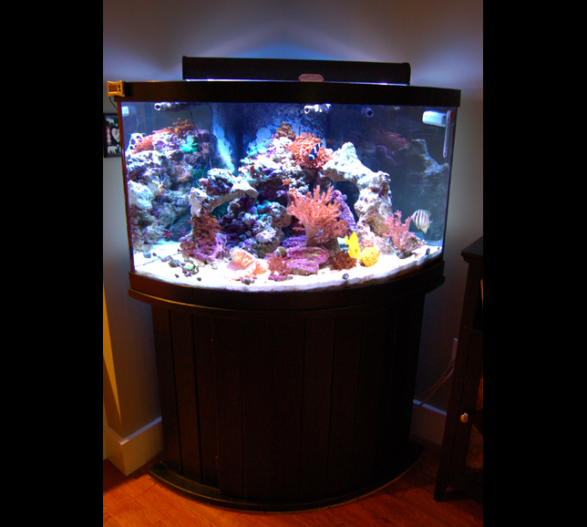90 gallon corner aquarium 1000 aquarium ideas for 55 gallon corner fish tank